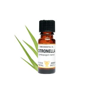 Citronella Essential Oil 10ml - Amphora Aromatics