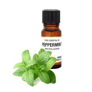 Peppermint Essential oil 10ml - Amphora Aromatics