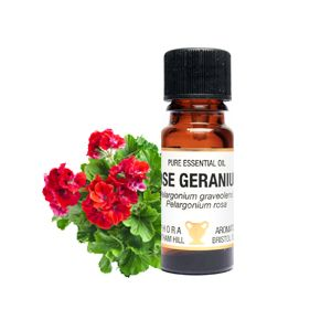 Rose Geranium Essential Oil 10ml - Amphora Aromatics